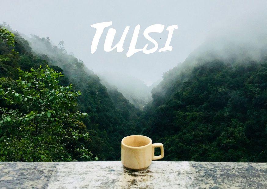 TULSI: a kelet egyik legszentebb és legkedveltebb gyógyfüve